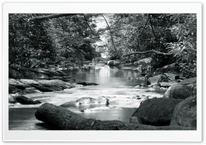 Forest Stream Black And White HD Wide Wallpaper for 4K UHD Widescreen desktop & smartphone