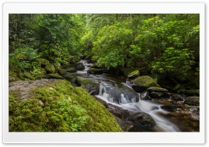 Forest Stream, Killarney National Park, Ireland HD Wide Wallpaper for 4K UHD Widescreen desktop & smartphone