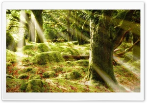 Forest Sunlight HD Wide Wallpaper for Widescreen