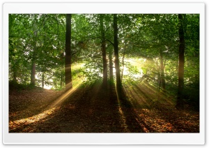 Forest Sunrise HD Wide Wallpaper for Widescreen