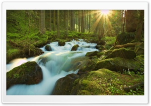 Forest Sunshine HD Wide Wallpaper for Widescreen