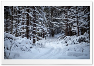 Forest Trail In The Snow HD Wide Wallpaper for 4K UHD Widescreen desktop & smartphone