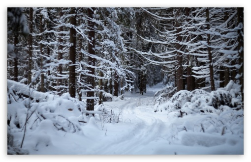 Forest Trail In The Snow ❤ 4K UHD Wallpaper for Wide 16:10 5:3 Widescreen WHXGA WQXGA WUXGA WXGA WGA ; 4K UHD 16:9 Ultra High Definition 2160p 1440p 1080p 900p 720p ; Standard 4:3 5:4 3:2 Fullscreen UXGA XGA SVGA QSXGA SXGA DVGA HVGA HQVGA ( Apple PowerBook G4 iPhone 4 3G 3GS iPod Touch ) ; Tablet 1:1 ; iPad 1/2/Mini ; Mobile 4:3 5:3 3:2 16:9 5:4 - UXGA XGA SVGA WGA DVGA HVGA HQVGA ( Apple PowerBook G4 iPhone 4 3G 3GS iPod Touch ) 2160p 1440p 1080p 900p 720p QSXGA SXGA ; Dual 16:10 5:3 4:3 5:4 WHXGA WQXGA WUXGA WXGA WGA UXGA XGA SVGA QSXGA SXGA ;