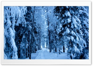 Forest Trails In The Snow HD Wide Wallpaper for Widescreen