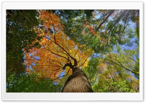 Forest Trees, Autumn HD Wide Wallpaper for Widescreen