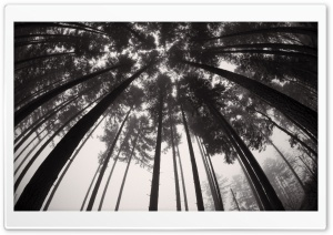 Forest Trees Black and White HD Wide Wallpaper for Widescreen