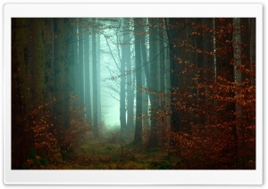 Forest, Trees, Footpath, Fog, Autumn HD Wide Wallpaper for 4K UHD Widescreen desktop & smartphone