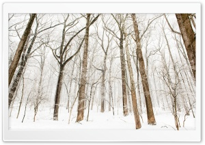 Forest Trees, Snow, Winter Ultra HD Wallpaper for 4K UHD Widescreen desktop, tablet & smartphone