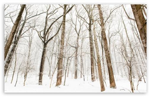 Forest Trees, Snow, Winter UltraHD Wallpaper for Wide 16:10 5:3 Widescreen WHXGA WQXGA WUXGA WXGA WGA ; UltraWide 21:9 24:10 ; 8K UHD TV 16:9 Ultra High Definition 2160p 1440p 1080p 900p 720p ; UHD 16:9 2160p 1440p 1080p 900p 720p ; Standard 4:3 5:4 3:2 Fullscreen UXGA XGA SVGA QSXGA SXGA DVGA HVGA HQVGA ( Apple PowerBook G4 iPhone 4 3G 3GS iPod Touch ) ; Smartphone 16:9 3:2 5:3 2160p 1440p 1080p 900p 720p DVGA HVGA HQVGA ( Apple PowerBook G4 iPhone 4 3G 3GS iPod Touch ) WGA ; Tablet 1:1 ; iPad 1/2/Mini ; Mobile 4:3 5:3 3:2 16:9 5:4 - UXGA XGA SVGA WGA DVGA HVGA HQVGA ( Apple PowerBook G4 iPhone 4 3G 3GS iPod Touch ) 2160p 1440p 1080p 900p 720p QSXGA SXGA ;