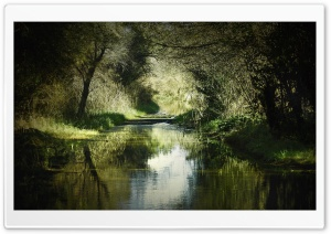 Forest Waterway HD Wide Wallpaper for Widescreen