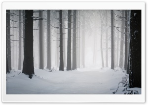 Forest, Winter HD Wide Wallpaper for Widescreen