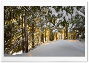 Forest, Winter Ultra HD Wallpaper for 4K UHD Widescreen desktop, tablet & smartphone