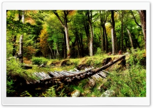 Forest Wooden Bridge HD Wide Wallpaper for Widescreen
