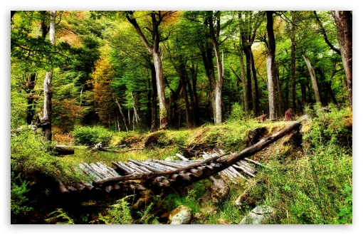 Forest Wooden Bridge HD wallpaper for Wide 16:10 5:3 Widescreen WHXGA WQXGA WUXGA WXGA WGA ; HD 16:9 High Definition WQHD QWXGA 1080p 900p 720p QHD nHD ; UHD 16:9 WQHD QWXGA 1080p 900p 720p QHD nHD ; Standard 4:3 5:4 3:2 Fullscreen UXGA XGA SVGA QSXGA SXGA DVGA HVGA HQVGA devices ( Apple PowerBook G4 iPhone 4 3G 3GS iPod Touch ) ; Tablet 1:1 ; iPad 1/2/Mini ; Mobile 4:3 5:3 3:2 16:9 5:4 - UXGA XGA SVGA WGA DVGA HVGA HQVGA devices ( Apple PowerBook G4 iPhone 4 3G 3GS iPod Touch ) WQHD QWXGA 1080p 900p 720p QHD nHD QSXGA SXGA ; Dual 16:10 5:3 16:9 4:3 5:4 WHXGA WQXGA WUXGA WXGA WGA WQHD QWXGA 1080p 900p 720p QHD nHD UXGA XGA SVGA QSXGA SXGA ;