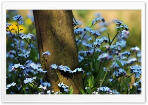 Forget Me Not Flowers Near A Wooden Pole HD Wide Wallpaper for 4K UHD Widescreen desktop & smartphone