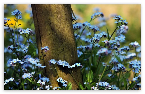 Forget Me Not Flowers Near A Wooden Pole ❤ 4K UHD Wallpaper for Wide 16:10 5:3 Widescreen WHXGA WQXGA WUXGA WXGA WGA ; 4K UHD 16:9 Ultra High Definition 2160p 1440p 1080p 900p 720p ; UHD 16:9 2160p 1440p 1080p 900p 720p ; Standard 4:3 5:4 3:2 Fullscreen UXGA XGA SVGA QSXGA SXGA DVGA HVGA HQVGA ( Apple PowerBook G4 iPhone 4 3G 3GS iPod Touch ) ; Tablet 1:1 ; iPad 1/2/Mini ; Mobile 4:3 5:3 3:2 16:9 5:4 - UXGA XGA SVGA WGA DVGA HVGA HQVGA ( Apple PowerBook G4 iPhone 4 3G 3GS iPod Touch ) 2160p 1440p 1080p 900p 720p QSXGA SXGA ; Dual 4:3 5:4 UXGA XGA SVGA QSXGA SXGA ;