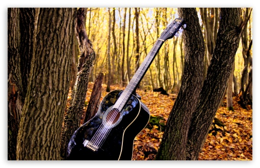 Forrest Guitar HD wallpaper for Wide 16:10 5:3 Widescreen WHXGA WQXGA WUXGA WXGA WGA ; HD 16:9 High Definition WQHD QWXGA 1080p 900p 720p QHD nHD ; UHD 16:9 WQHD QWXGA 1080p 900p 720p QHD nHD ; Standard 4:3 5:4 3:2 Fullscreen UXGA XGA SVGA QSXGA SXGA DVGA HVGA HQVGA devices ( Apple PowerBook G4 iPhone 4 3G 3GS iPod Touch ) ; Tablet 1:1 ; iPad 1/2/Mini ; Mobile 4:3 5:3 3:2 16:9 5:4 - UXGA XGA SVGA WGA DVGA HVGA HQVGA devices ( Apple PowerBook G4 iPhone 4 3G 3GS iPod Touch ) WQHD QWXGA 1080p 900p 720p QHD nHD QSXGA SXGA ;