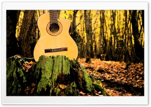 Forrest Guitar HD Wide Wallpaper for Widescreen