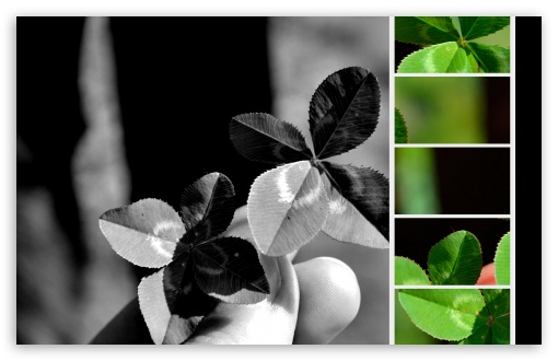 Four-leaf Clovers ❤ 4K UHD Wallpaper for Wide 16:10 5:3 Widescreen WHXGA WQXGA WUXGA WXGA WGA ; 4K UHD 16:9 Ultra High Definition 2160p 1440p 1080p 900p 720p ; UHD 16:9 2160p 1440p 1080p 900p 720p ; Standard 4:3 5:4 3:2 Fullscreen UXGA XGA SVGA QSXGA SXGA DVGA HVGA HQVGA ( Apple PowerBook G4 iPhone 4 3G 3GS iPod Touch ) ; Tablet 1:1 ; iPad 1/2/Mini ; Mobile 4:3 5:3 3:2 16:9 5:4 - UXGA XGA SVGA WGA DVGA HVGA HQVGA ( Apple PowerBook G4 iPhone 4 3G 3GS iPod Touch ) 2160p 1440p 1080p 900p 720p QSXGA SXGA ;