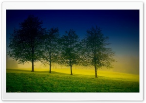 Four Trees HD Wide Wallpaper for 4K UHD Widescreen desktop & smartphone