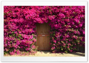 Fragrant Doorway HD Wide Wallpaper for Widescreen