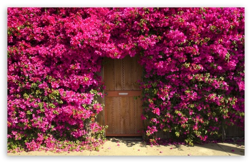 Fragrant Doorway HD wallpaper for Wide 16:10 5:3 Widescreen WHXGA WQXGA WUXGA WXGA WGA ; HD 16:9 High Definition WQHD QWXGA 1080p 900p 720p QHD nHD ; Standard 4:3 5:4 3:2 Fullscreen UXGA XGA SVGA QSXGA SXGA DVGA HVGA HQVGA devices ( Apple PowerBook G4 iPhone 4 3G 3GS iPod Touch ) ; Tablet 1:1 ; iPad 1/2/Mini ; Mobile 4:3 5:3 3:2 16:9 5:4 - UXGA XGA SVGA WGA DVGA HVGA HQVGA devices ( Apple PowerBook G4 iPhone 4 3G 3GS iPod Touch ) WQHD QWXGA 1080p 900p 720p QHD nHD QSXGA SXGA ;