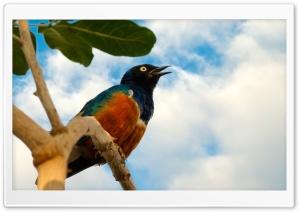 Free as a Bird Ultra HD Wallpaper for 4K UHD Widescreen desktop, tablet & smartphone