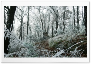 Freezed Forest HD Wide Wallpaper for Widescreen