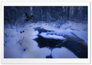 Freezing Stream HD Wide Wallpaper for Widescreen
