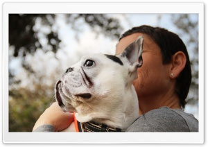 Frenchie HD Wide Wallpaper for Widescreen