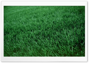 Fresh Cut Grass HD Wide Wallpaper for Widescreen