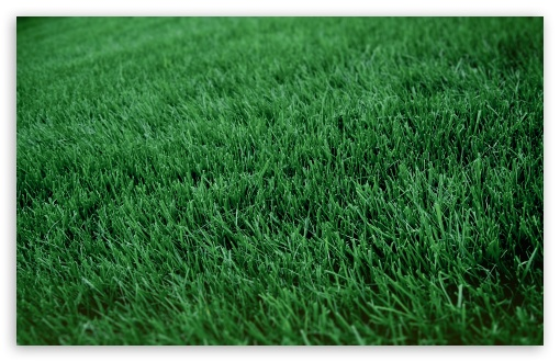 Fresh Cut Grass HD wallpaper for Wide 16:10 5:3 Widescreen WHXGA WQXGA WUXGA WXGA WGA ; HD 16:9 High Definition WQHD QWXGA 1080p 900p 720p QHD nHD ; Standard 4:3 5:4 3:2 Fullscreen UXGA XGA SVGA QSXGA SXGA DVGA HVGA HQVGA devices ( Apple PowerBook G4 iPhone 4 3G 3GS iPod Touch ) ; Tablet 1:1 ; iPad 1/2/Mini ; Mobile 4:3 5:3 3:2 16:9 5:4 - UXGA XGA SVGA WGA DVGA HVGA HQVGA devices ( Apple PowerBook G4 iPhone 4 3G 3GS iPod Touch ) WQHD QWXGA 1080p 900p 720p QHD nHD QSXGA SXGA ;