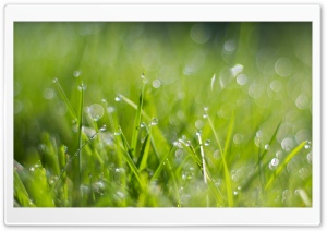 Fresh Dew Drops On Grass HD Wide Wallpaper for Widescreen