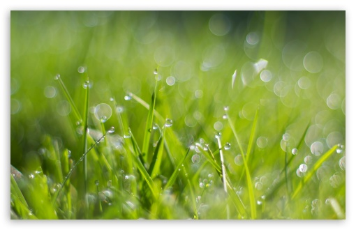 Fresh Dew Drops On Grass HD wallpaper for Wide 16:10 5:3 Widescreen WHXGA WQXGA WUXGA WXGA WGA ; HD 16:9 High Definition WQHD QWXGA 1080p 900p 720p QHD nHD ; Standard 4:3 5:4 3:2 Fullscreen UXGA XGA SVGA QSXGA SXGA DVGA HVGA HQVGA devices ( Apple PowerBook G4 iPhone 4 3G 3GS iPod Touch ) ; Smartphone 5:3 WGA ; Tablet 1:1 ; iPad 1/2/Mini ; Mobile 4:3 5:3 3:2 16:9 5:4 - UXGA XGA SVGA WGA DVGA HVGA HQVGA devices ( Apple PowerBook G4 iPhone 4 3G 3GS iPod Touch ) WQHD QWXGA 1080p 900p 720p QHD nHD QSXGA SXGA ; Dual 16:10 5:3 16:9 4:3 5:4 WHXGA WQXGA WUXGA WXGA WGA WQHD QWXGA 1080p 900p 720p QHD nHD UXGA XGA SVGA QSXGA SXGA ;