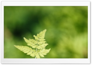 Fresh Fern Leaf HD Wide Wallpaper for Widescreen