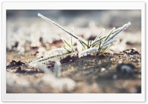 Fresh Frozen Grass HD Wide Wallpaper for Widescreen