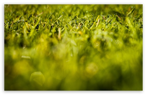 Fresh Grass HD wallpaper for Wide 16:10 5:3 Widescreen WHXGA WQXGA WUXGA WXGA WGA ; HD 16:9 High Definition WQHD QWXGA 1080p 900p 720p QHD nHD ; Standard 4:3 5:4 3:2 Fullscreen UXGA XGA SVGA QSXGA SXGA DVGA HVGA HQVGA devices ( Apple PowerBook G4 iPhone 4 3G 3GS iPod Touch ) ; Tablet 1:1 ; iPad 1/2/Mini ; Mobile 4:3 5:3 3:2 16:9 5:4 - UXGA XGA SVGA WGA DVGA HVGA HQVGA devices ( Apple PowerBook G4 iPhone 4 3G 3GS iPod Touch ) WQHD QWXGA 1080p 900p 720p QHD nHD QSXGA SXGA ; Dual 16:10 5:3 16:9 4:3 5:4 WHXGA WQXGA WUXGA WXGA WGA WQHD QWXGA 1080p 900p 720p QHD nHD UXGA XGA SVGA QSXGA SXGA ;