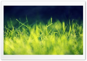 Fresh Grass HD Wide Wallpaper for Widescreen