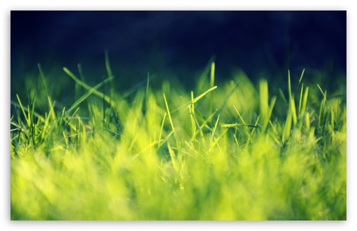 Fresh Grass ❤ 4K UHD Wallpaper for Wide 16:10 5:3 Widescreen WHXGA WQXGA WUXGA WXGA WGA ; 4K UHD 16:9 Ultra High Definition 2160p 1440p 1080p 900p 720p ; Standard 4:3 5:4 3:2 Fullscreen UXGA XGA SVGA QSXGA SXGA DVGA HVGA HQVGA ( Apple PowerBook G4 iPhone 4 3G 3GS iPod Touch ) ; Tablet 1:1 ; iPad 1/2/Mini ; Mobile 4:3 5:3 3:2 16:9 5:4 - UXGA XGA SVGA WGA DVGA HVGA HQVGA ( Apple PowerBook G4 iPhone 4 3G 3GS iPod Touch ) 2160p 1440p 1080p 900p 720p QSXGA SXGA ;