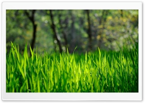 Fresh Grass HD Wide Wallpaper for 4K UHD Widescreen desktop & smartphone
