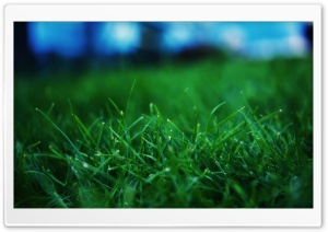 Fresh Grass Close Up HD Wide Wallpaper for Widescreen