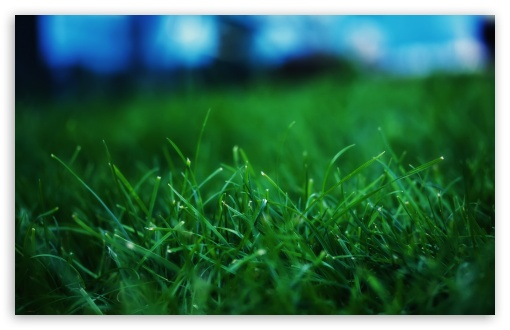 Fresh Grass Close Up UltraHD Wallpaper for Wide 16:10 5:3 Widescreen WHXGA WQXGA WUXGA WXGA WGA ; 8K UHD TV 16:9 Ultra High Definition 2160p 1440p 1080p 900p 720p ; Standard 4:3 5:4 3:2 Fullscreen UXGA XGA SVGA QSXGA SXGA DVGA HVGA HQVGA ( Apple PowerBook G4 iPhone 4 3G 3GS iPod Touch ) ; Tablet 1:1 ; iPad 1/2/Mini ; Mobile 4:3 5:3 3:2 16:9 5:4 - UXGA XGA SVGA WGA DVGA HVGA HQVGA ( Apple PowerBook G4 iPhone 4 3G 3GS iPod Touch ) 2160p 1440p 1080p 900p 720p QSXGA SXGA ; Dual 5:4 QSXGA SXGA ;