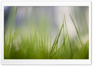 Fresh Green Grass HD Wide Wallpaper for Widescreen