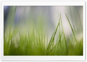 Fresh Green Grass HD Wide Wallpaper for 4K UHD Widescreen desktop & smartphone