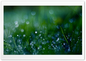 Fresh Green Grass Bokeh HD Wide Wallpaper for Widescreen
