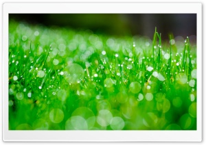 Fresh Green Grass, Bokeh Ultra HD Wallpaper for 4K UHD Widescreen desktop, tablet & smartphone