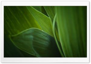Fresh Green Leaves HD Wide Wallpaper for Widescreen