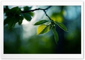 Fresh Green Leaves Summer HD Wide Wallpaper for 4K UHD Widescreen desktop & smartphone