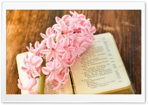 Fresh Hyacinth, Old Book HD Wide Wallpaper for 4K UHD Widescreen desktop & smartphone