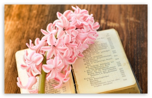 Fresh Hyacinth, Old Book ❤ 4K UHD Wallpaper for Wide 16:10 5:3 Widescreen WHXGA WQXGA WUXGA WXGA WGA ; 4K UHD 16:9 Ultra High Definition 2160p 1440p 1080p 900p 720p ; Standard 4:3 5:4 3:2 Fullscreen UXGA XGA SVGA QSXGA SXGA DVGA HVGA HQVGA ( Apple PowerBook G4 iPhone 4 3G 3GS iPod Touch ) ; Smartphone 5:3 WGA ; Tablet 1:1 ; iPad 1/2/Mini ; Mobile 4:3 5:3 3:2 16:9 5:4 - UXGA XGA SVGA WGA DVGA HVGA HQVGA ( Apple PowerBook G4 iPhone 4 3G 3GS iPod Touch ) 2160p 1440p 1080p 900p 720p QSXGA SXGA ;